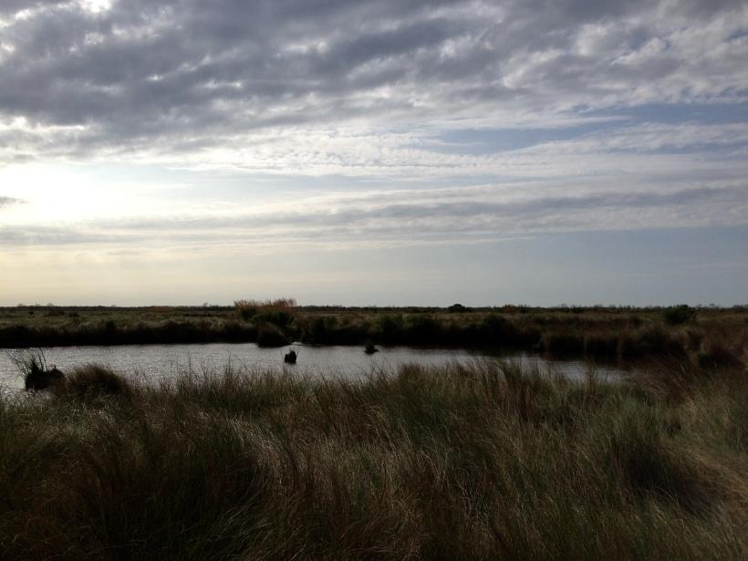 wetlands in Lousiana