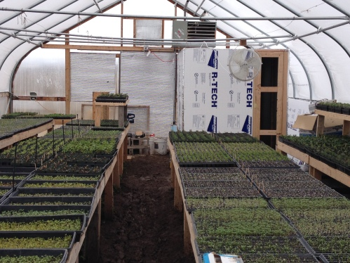 one of the hoop greenhouses growing micro-greens
