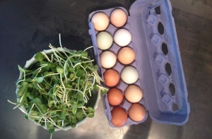 eggs and sunflower mico-greens from Cloud Nine Farm